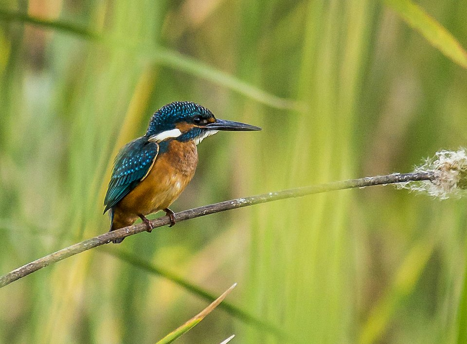 Kingfisher bird in India (Light Ray Photography/AGORA images)