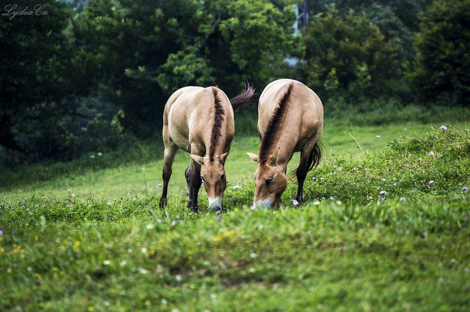 Peaceful horses in Asturias, Spain (Lydia Cuesta/AGORA images)