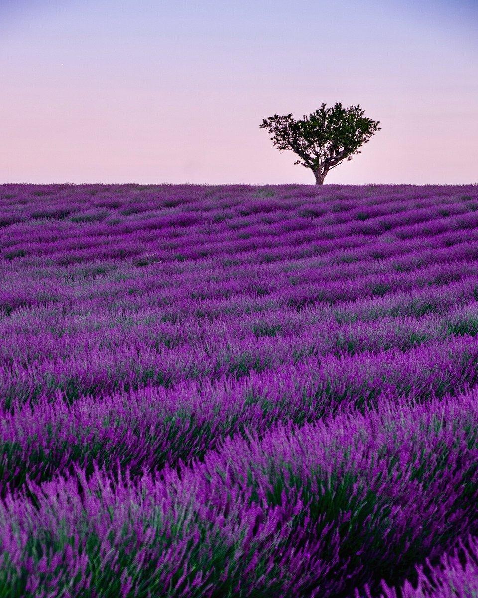 When the nature turns purple, Spain (Manuel Subirats/AGORA images)