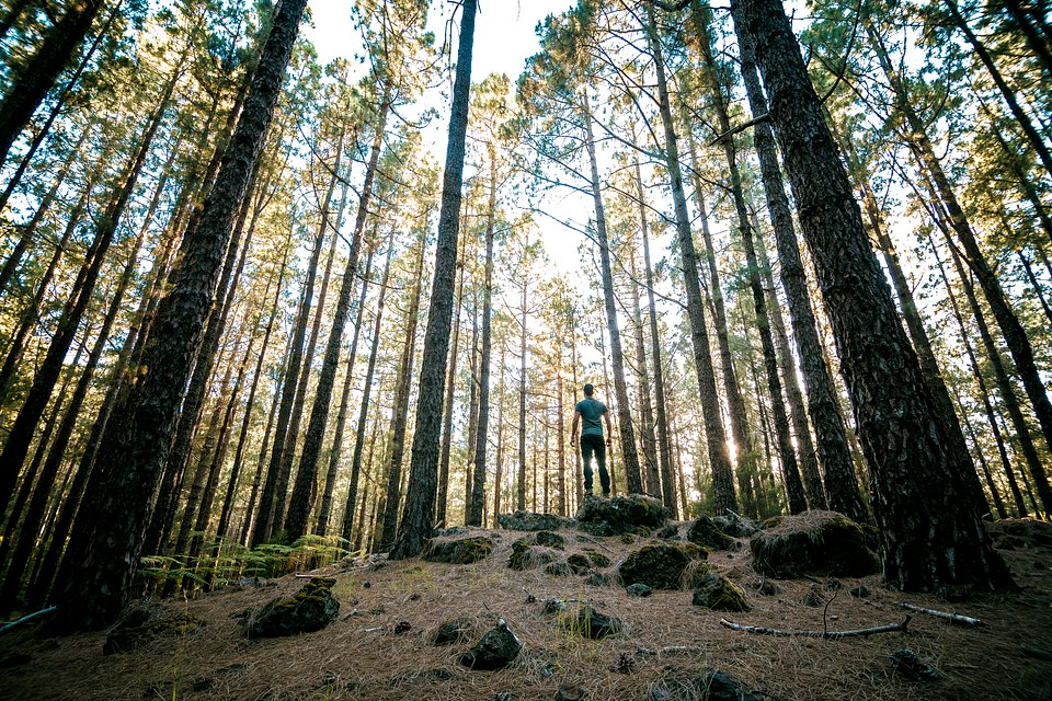 Self portrait surrounded by the immensity of forest trees, Spain (Wilmer Valdez Hinojosa/AGORA images)