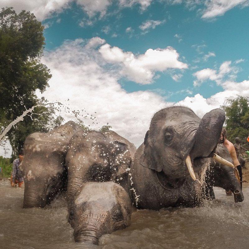 'bathing with elephants', Indonesia.jpg