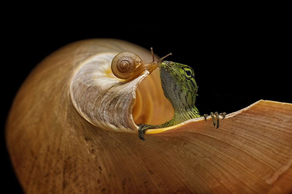 A lizard and a snail sharing a cute moment (Andi Halil / Agora)