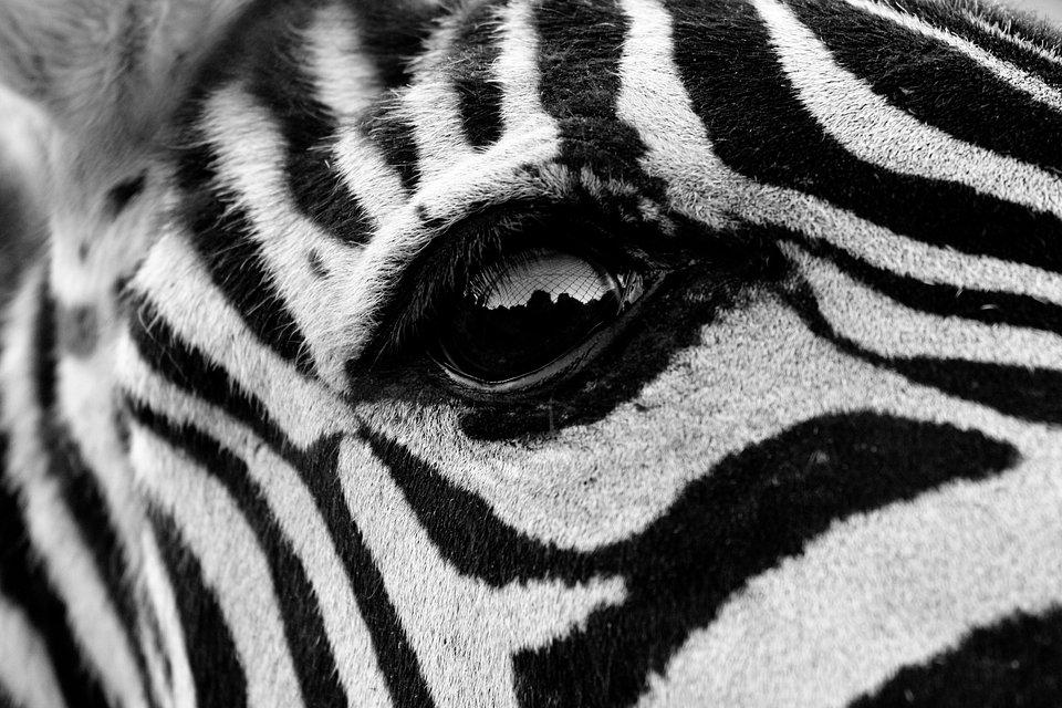 Shot taken at the Madrid safari. (Sara Pinto Marin/Agora)