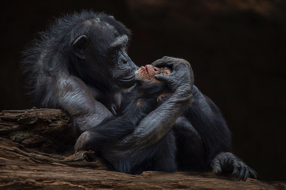 More than 2-hour wait for this photographer to capture this photo at the Tenerife zoo (Santiago López/Agora)