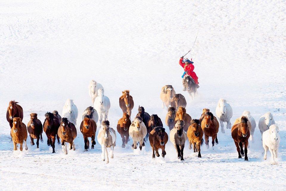 Winter shot from Mongolia (Zay Yar Lin/Agora)