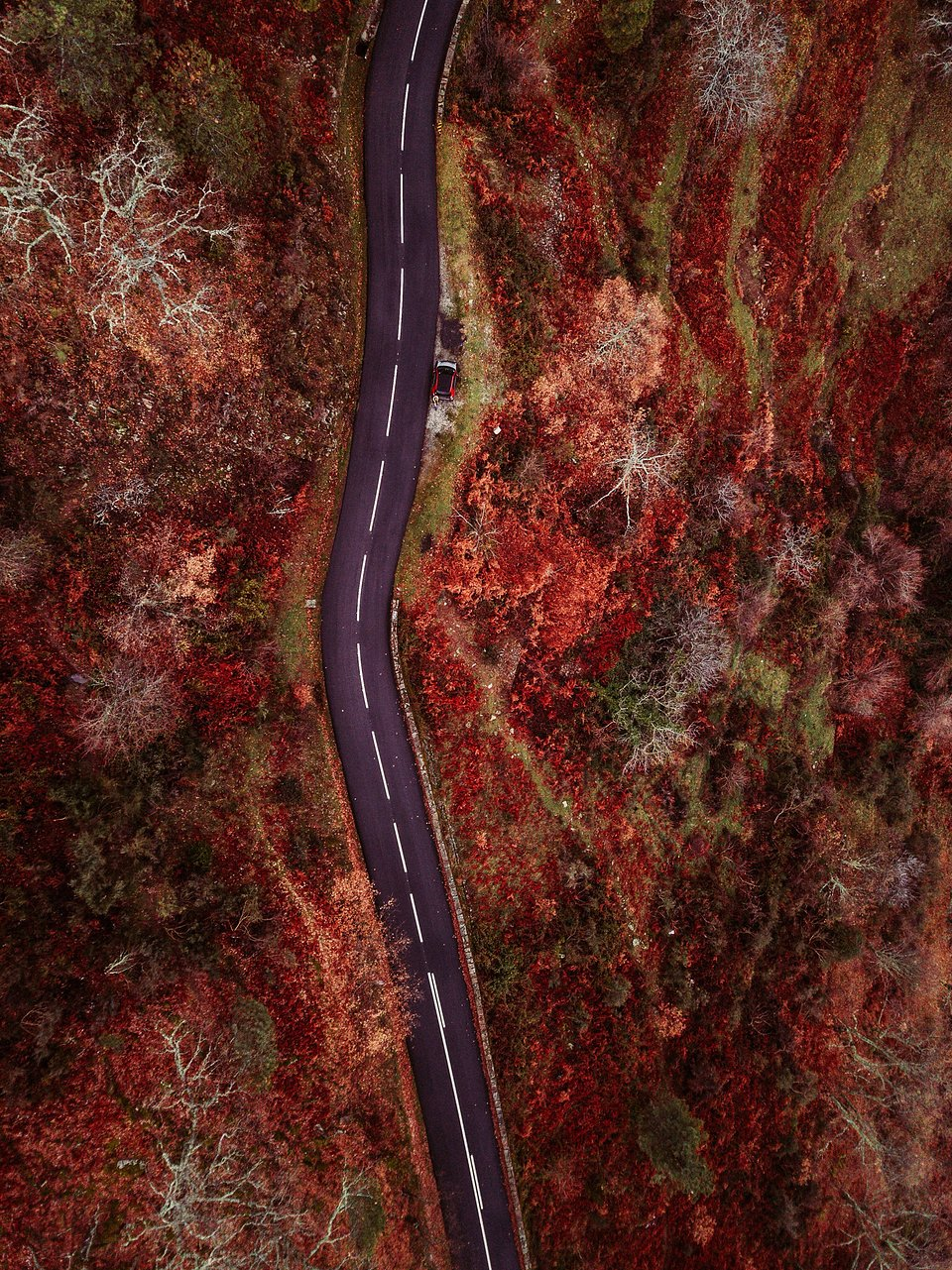 Autumn vibes in this aerial shot of a country road in Portugal  (Ksenia Zaiets/AGORA images)
