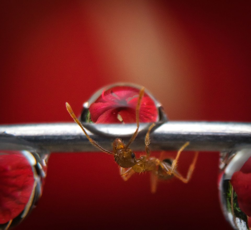 Macro shot of an ant making its way to the flower (Michael Angelo Luna/AGORA images)