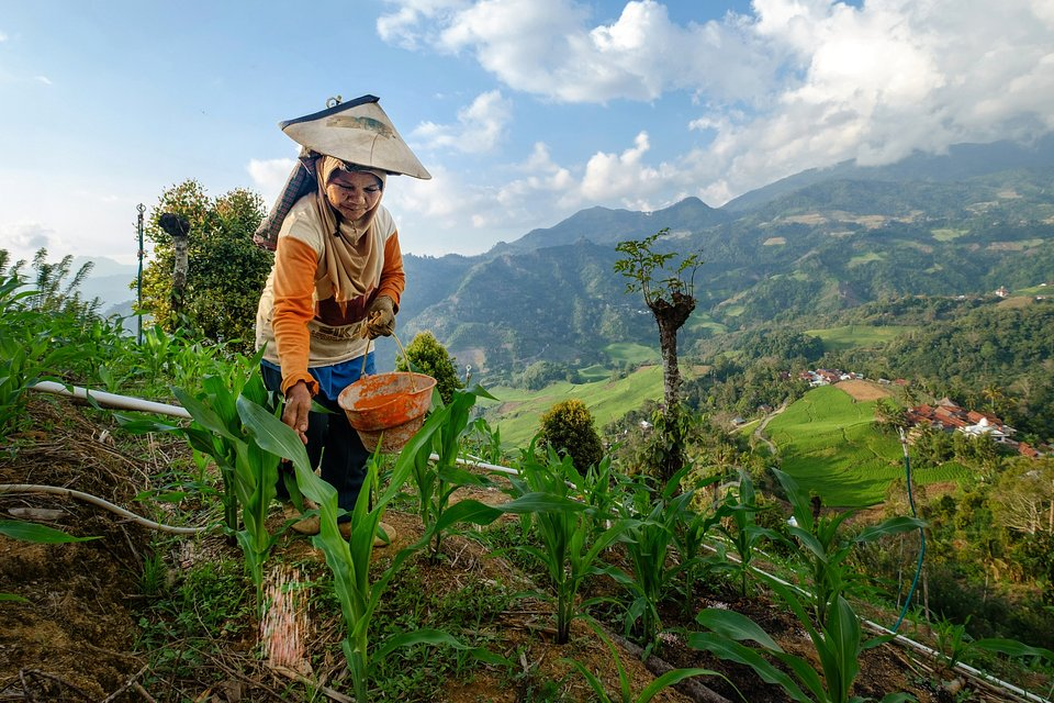 Farmwork at the top of Indonesian hills (Suratman Alimuddin/AGORA images)