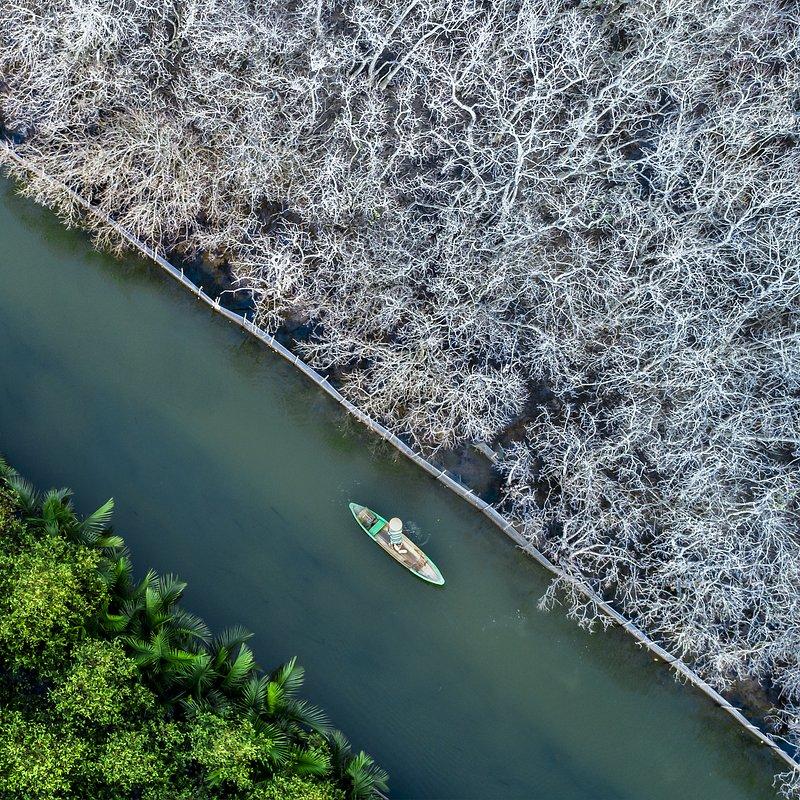 'Ru Cha forest' Khan Phan:AGORA images.jpg