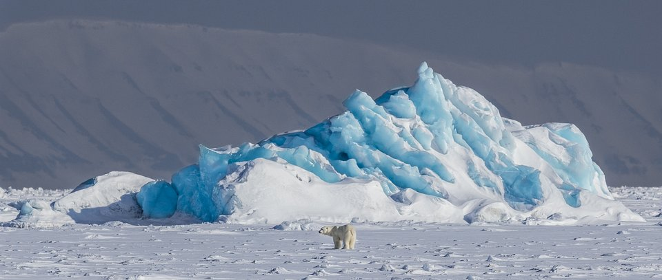 Although polar bears are large creatures, this bear looks small compared to the iceberg behind it. Taken on the east coast of Svalbard, Norway. (Paal Lund/Agora)