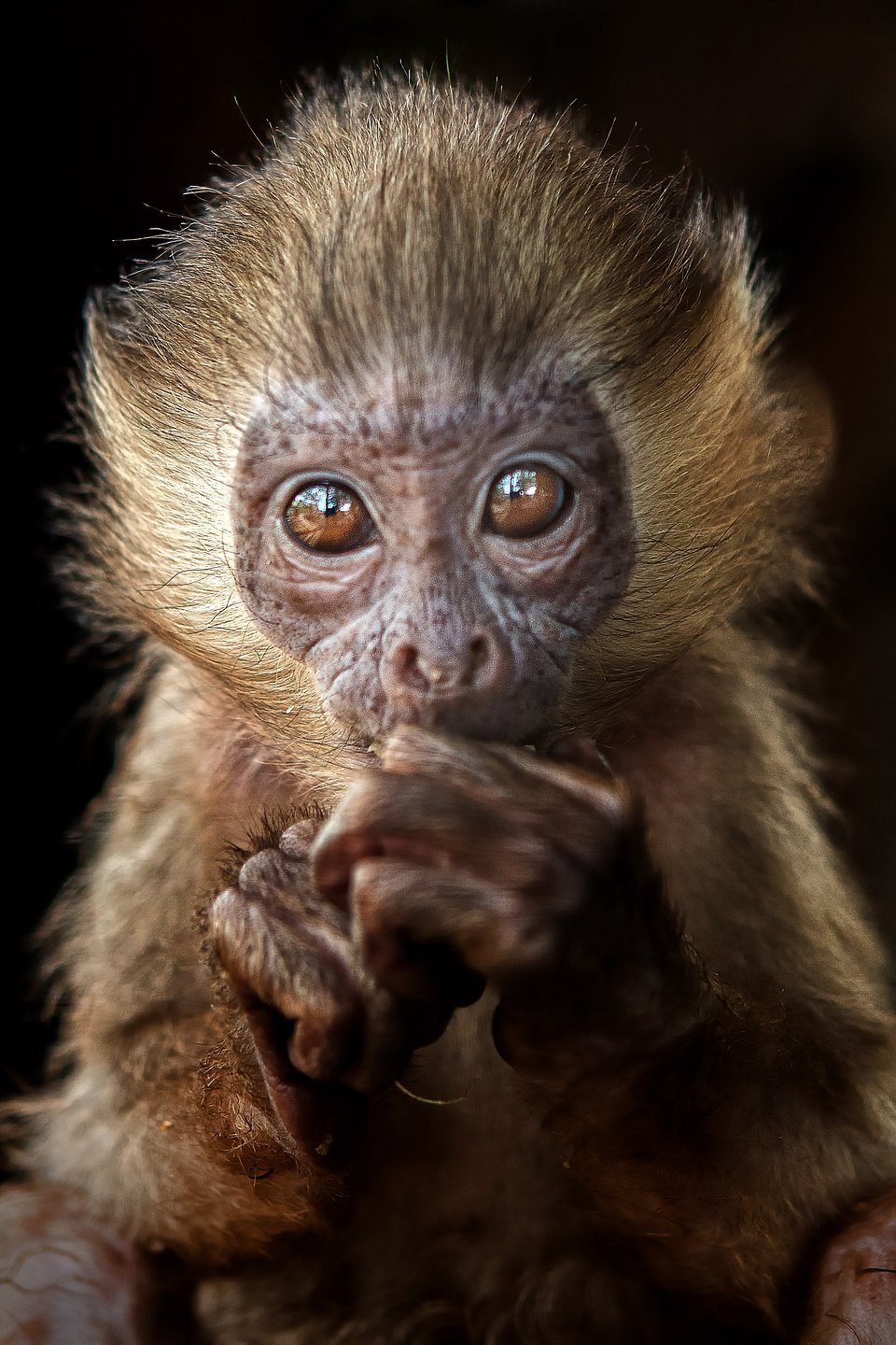 This baby monkey holds a lot of expression in its golden eyes. (Agora)