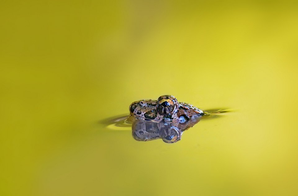 This small frog lives in the marsh water, enjoying its simple life. His eyes look curiously around his home. (Agora)