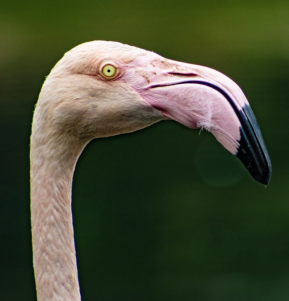 This massive flamingo was shot on a trip to Slimbridge Wetlands Trust in Gloucestershire. (Agora)
