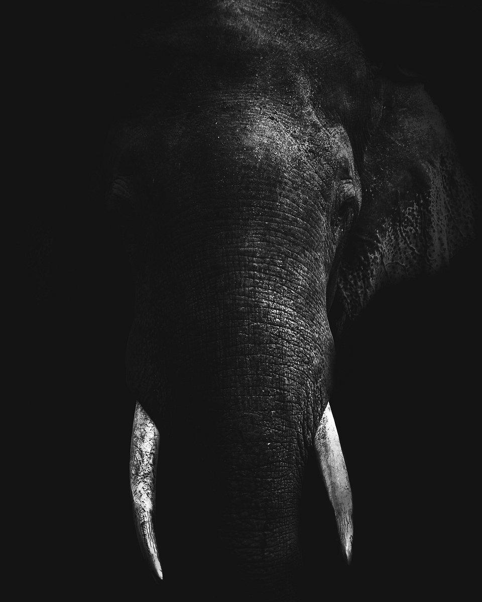 Location: Somawathiya National Park, Sri Lanka