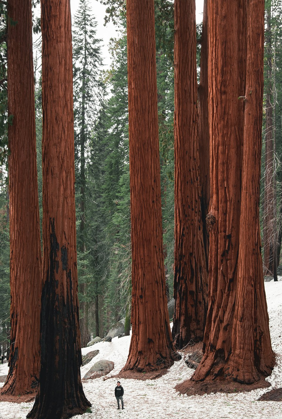Location: Sequoia National Park, USA