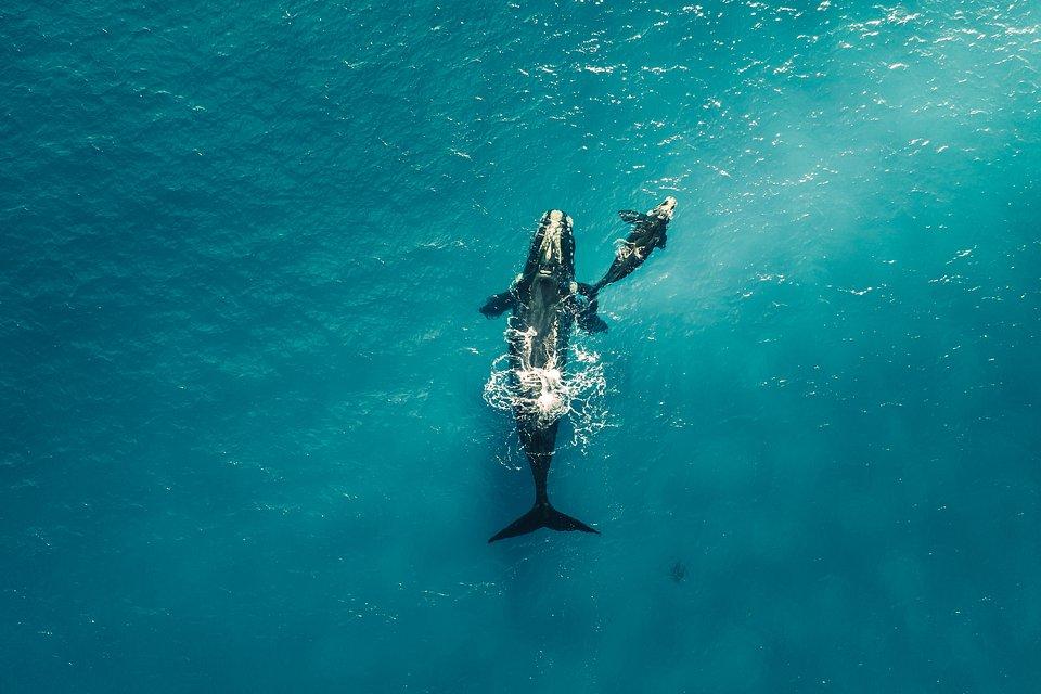 Location: Nativ Dog Beach Bay, Australia