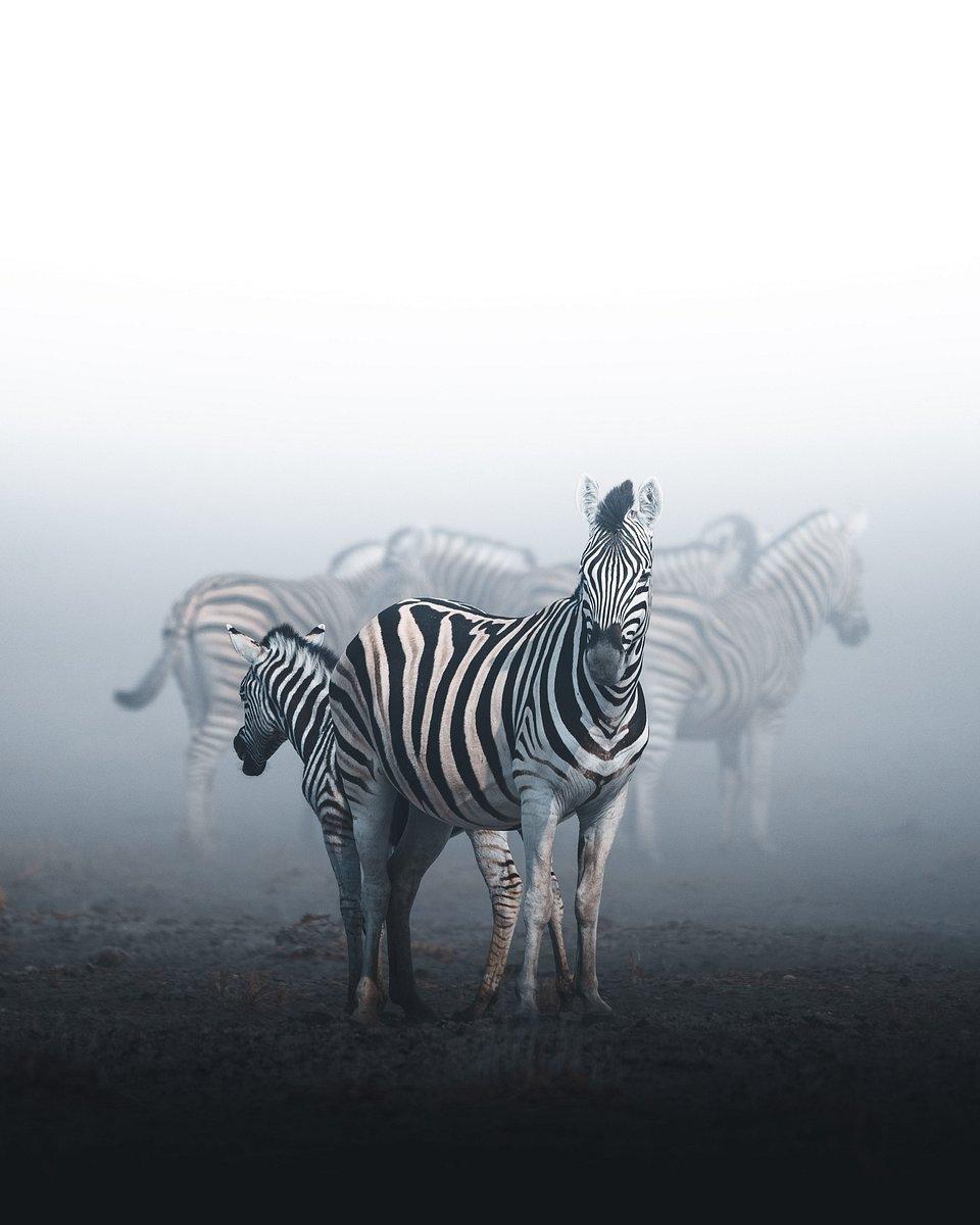 Location: Etosha National Park, Namibia