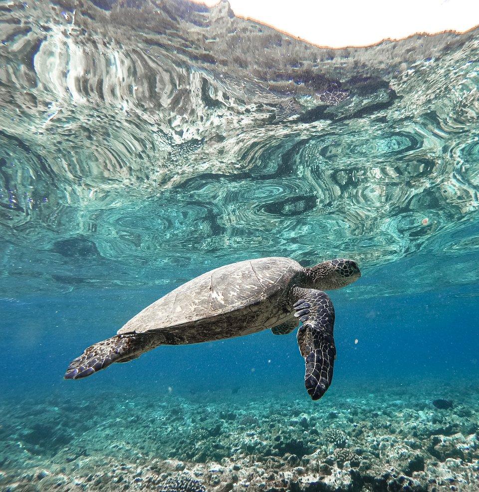 Location: Ke'e Beach, Kauai, USA