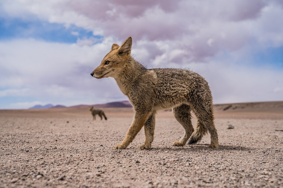Location: South Libez Desert, Bolivia