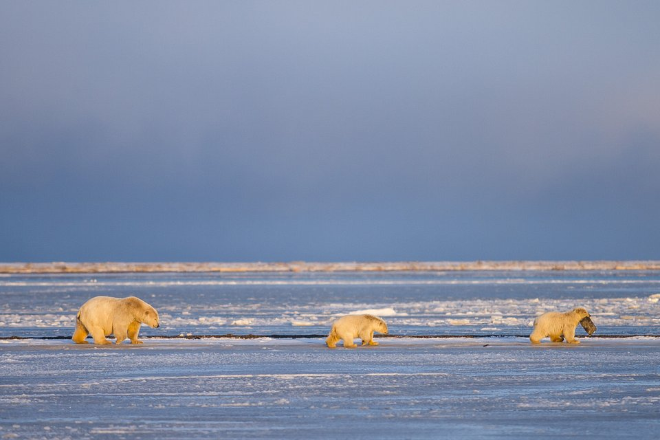 Location: Kaktovik, Alaska, USA