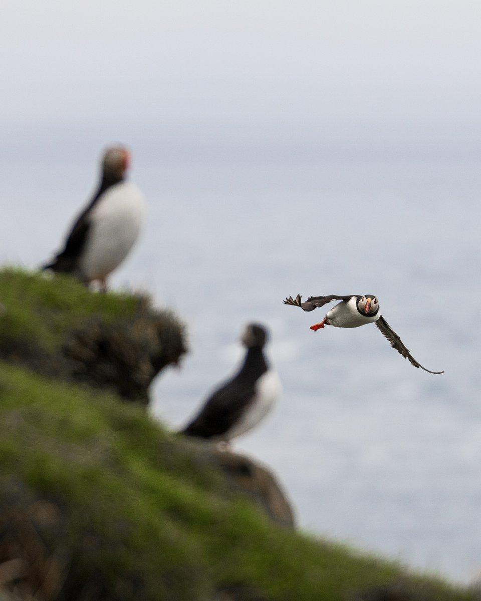 Location: Faroe Islands