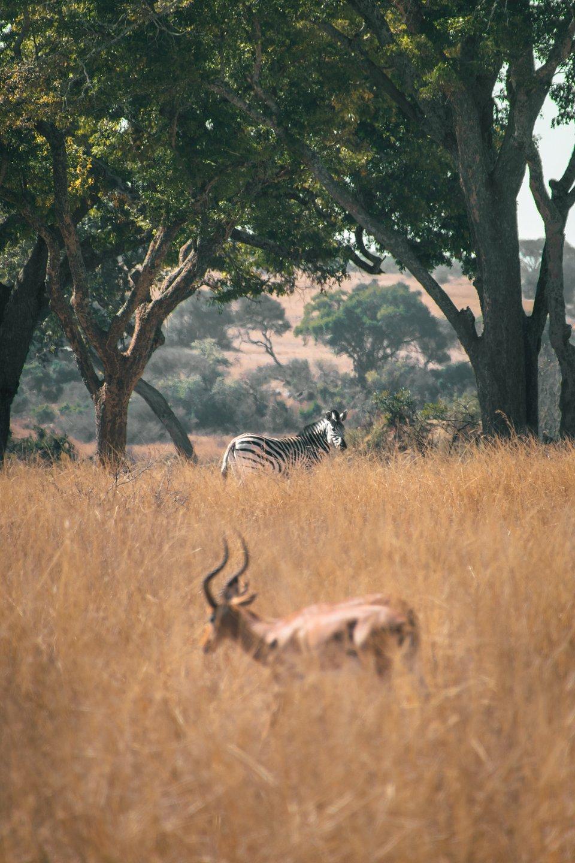 Location:  Imire Rhino Conservation, Zimbabwe