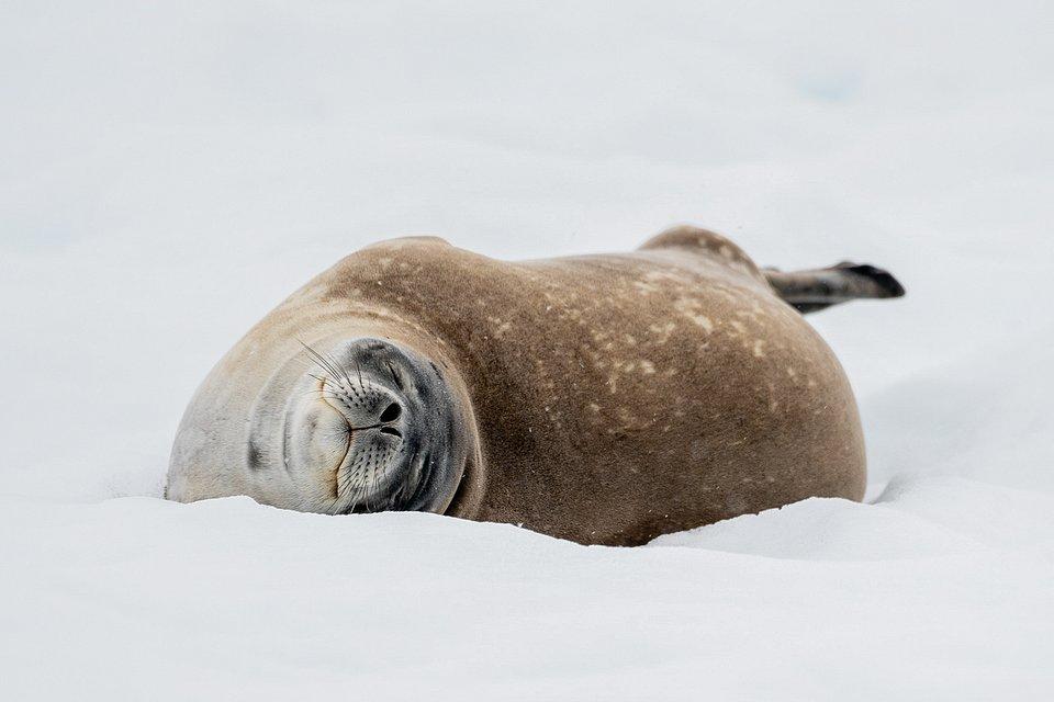Location: Antartica