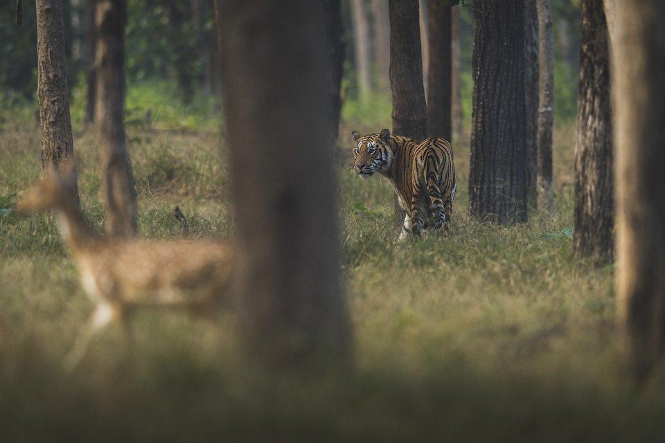 Location: Seoni, India