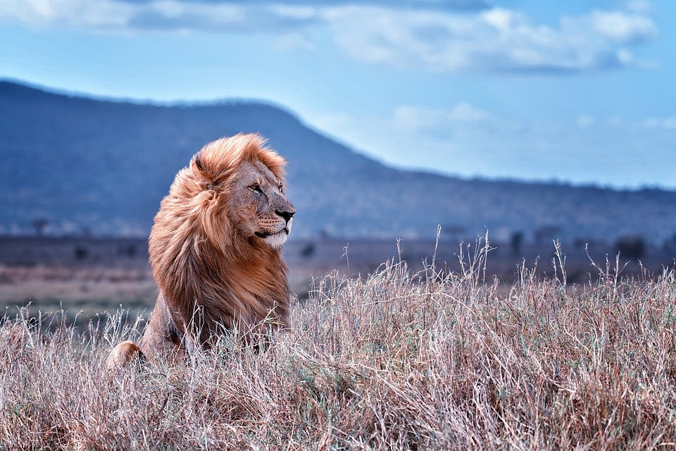 Location: Parc National De Serengeti, Tanzania