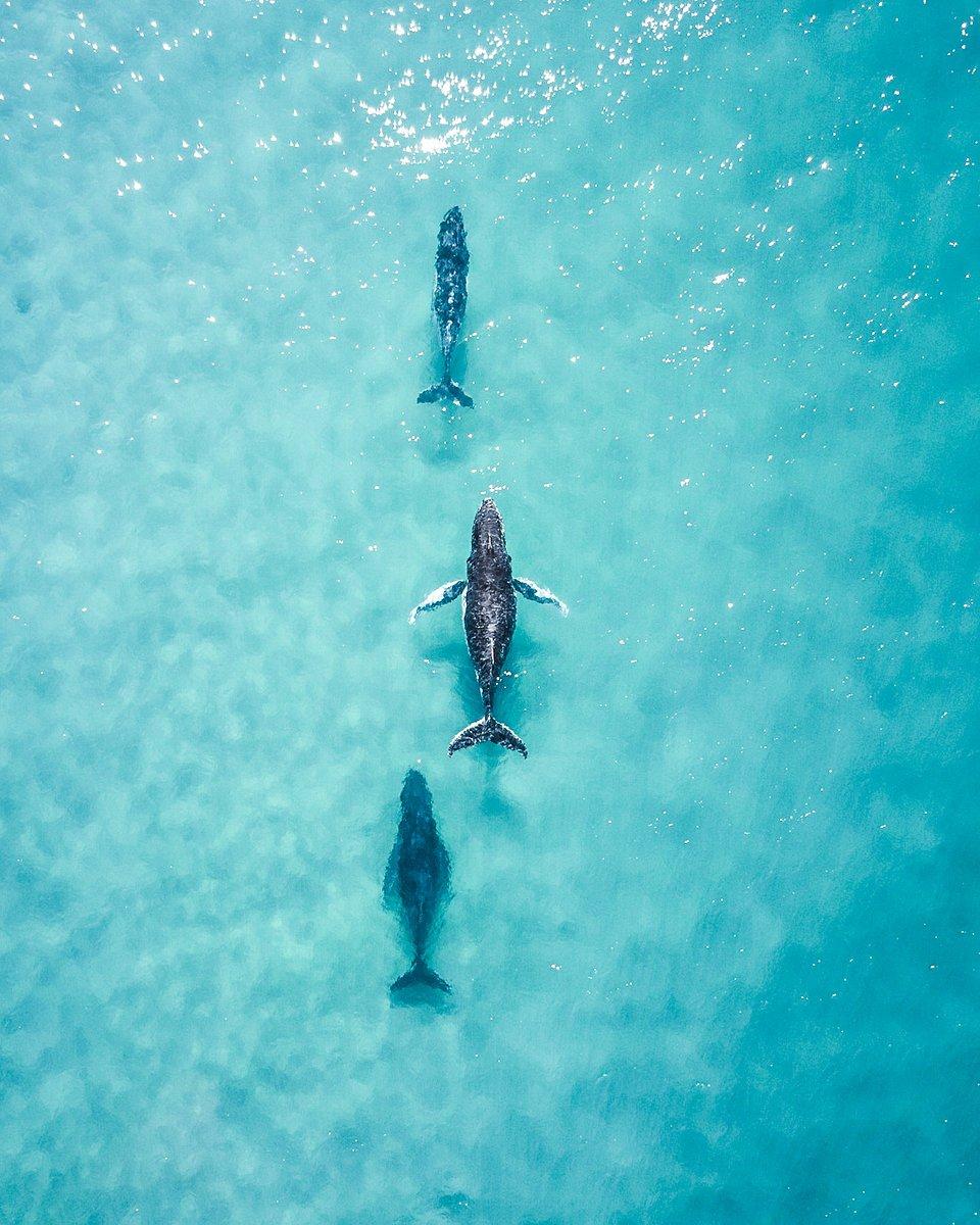 Location: Fraser Island, Queensland, Australia