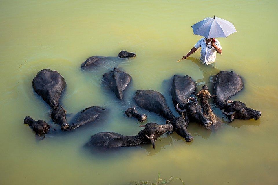 Location: Garhbeta, West Medinipur, West Bengal, India