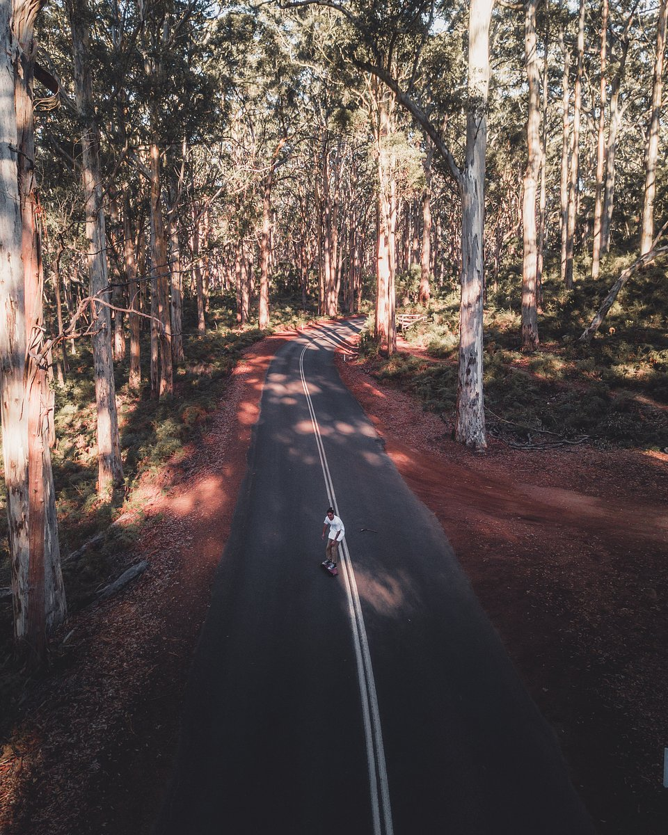 Location: Boranup Forest, Margaret River, Western Australia