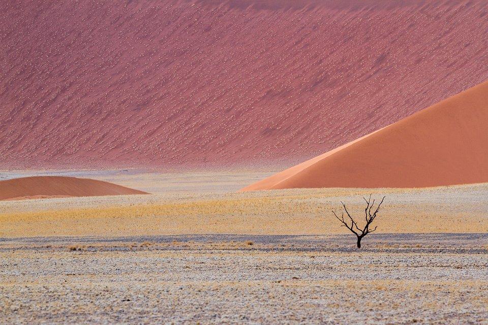Location: Namib Desert, Namibia