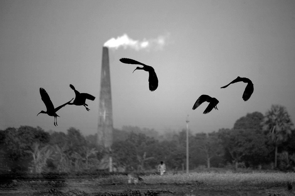 Location: Rajshahi, Bangladesh