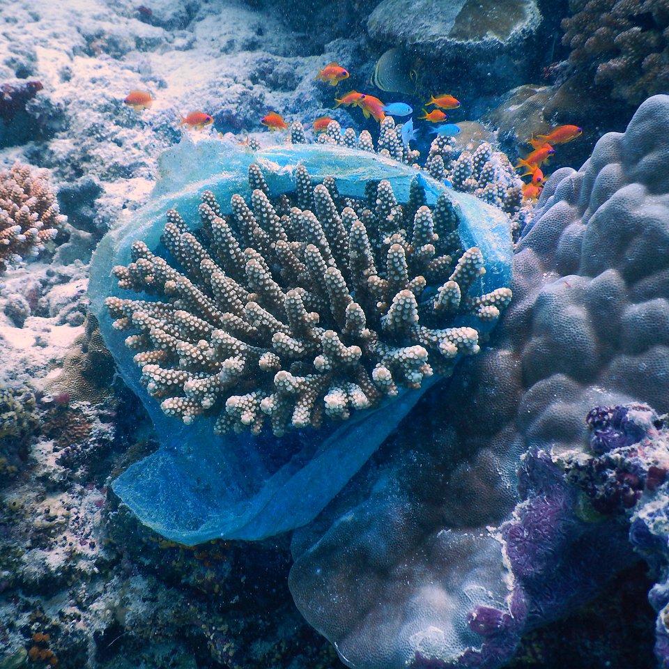 Location: Maldives