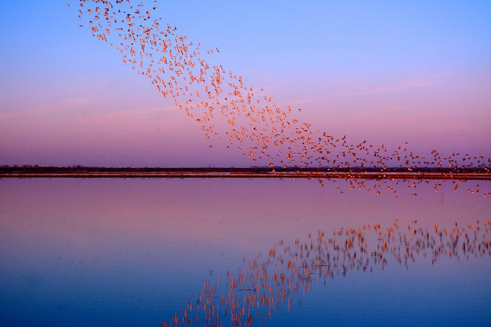 Location: Yolo Bypass Wildlife Area California, USA