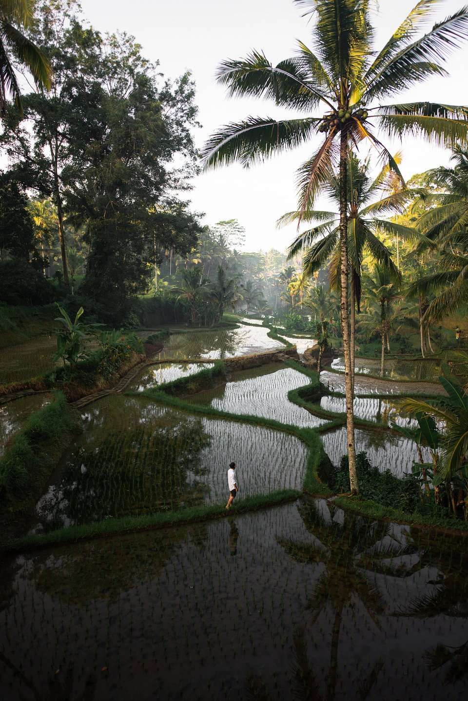 Location: Tegalalang Rice Terraces, Indonesia