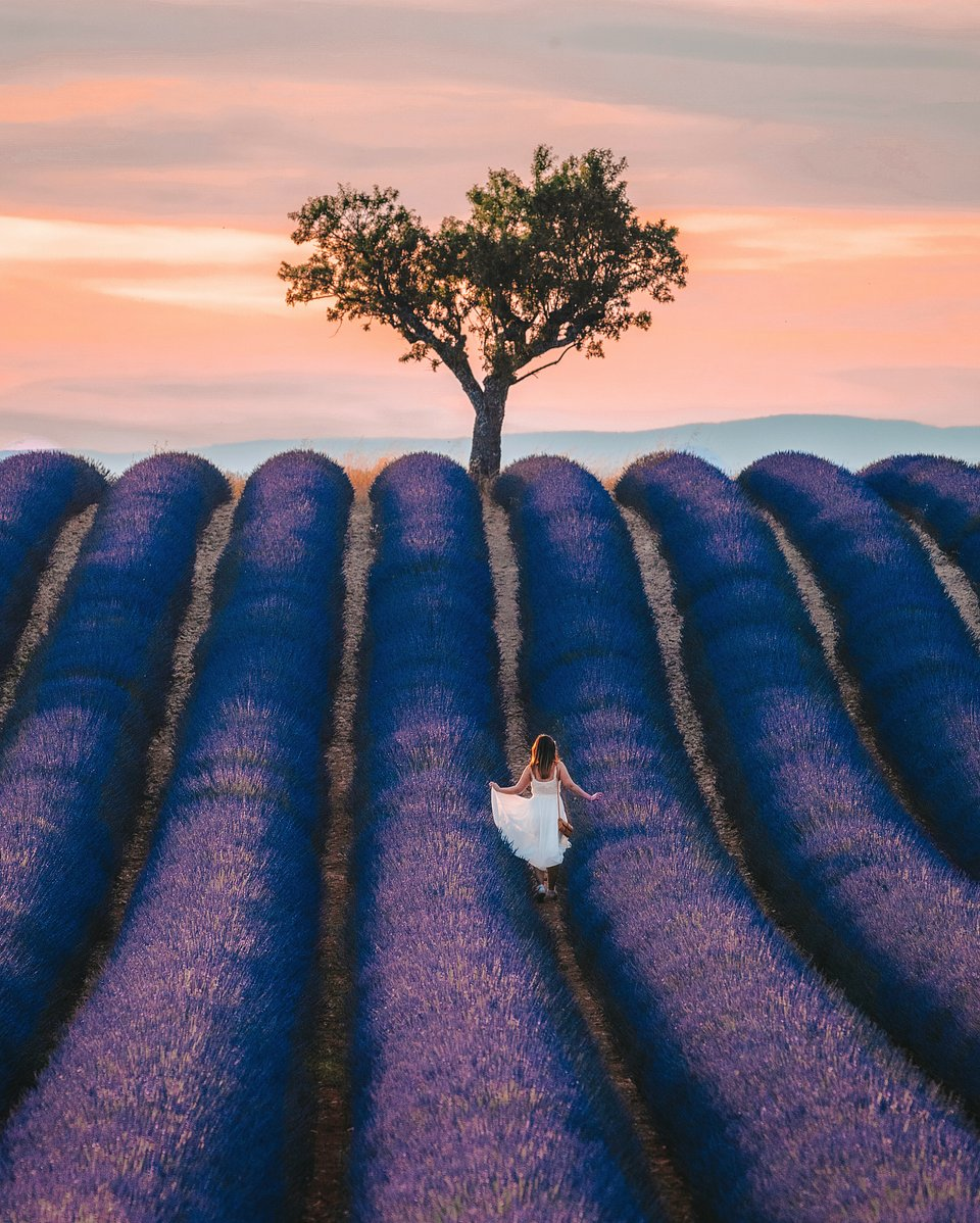 Location: Valensole, Provence, France