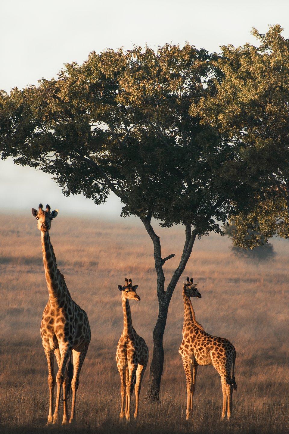 Location: Imire Rhino & Wildlife Conservation, Zimbabwe