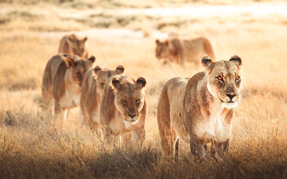 Location: Etosha, Namibia