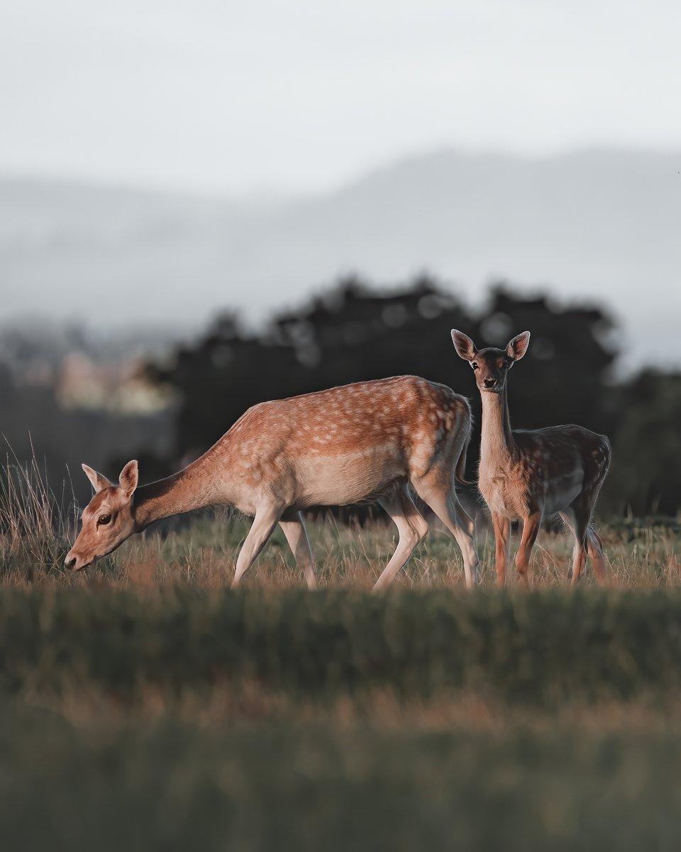 Location: Berkeley Deer Park, Berkeley, Gloucestershire, UK
