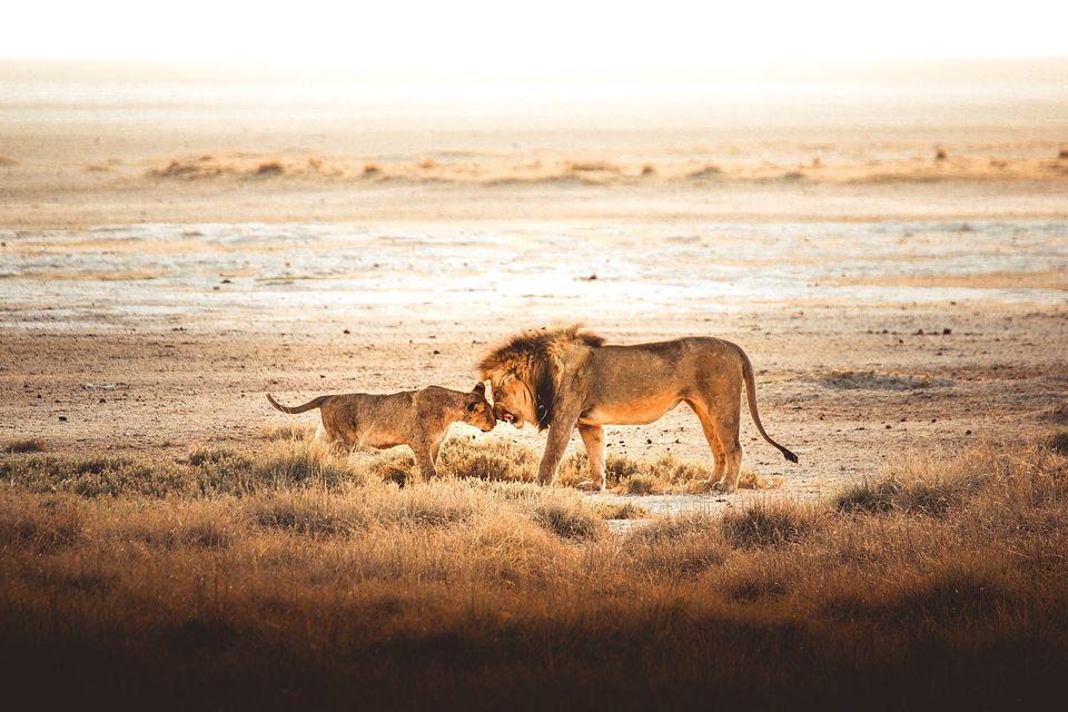 Location: Etosha Pan, Namibia