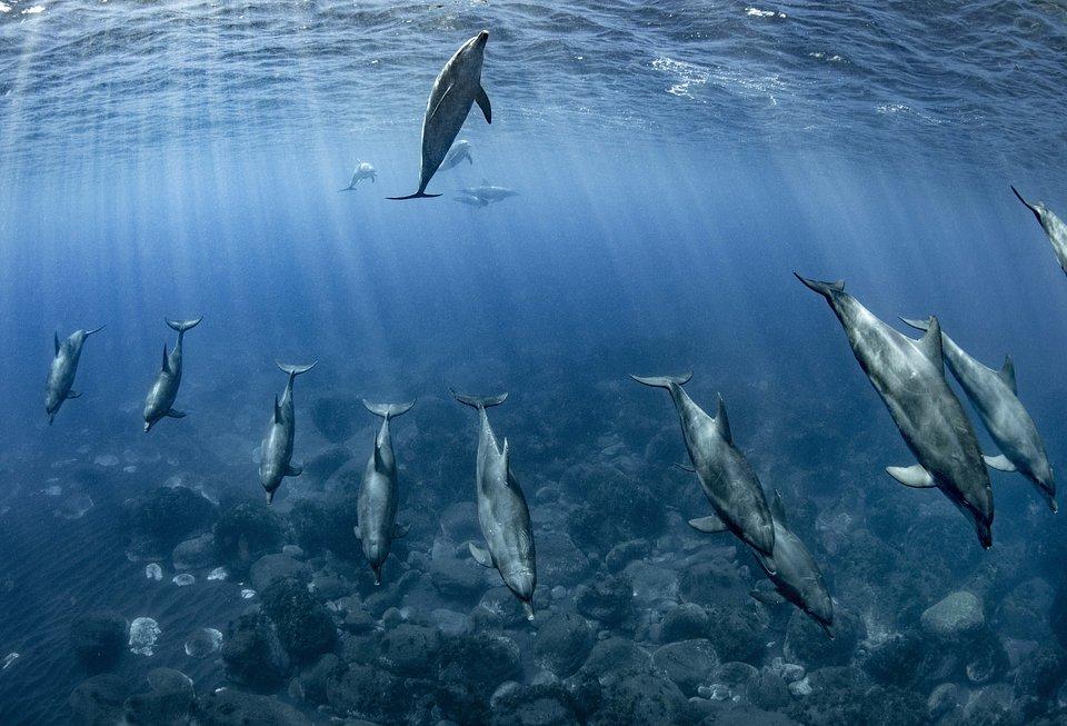 Location: Mikurajima Island, Japan