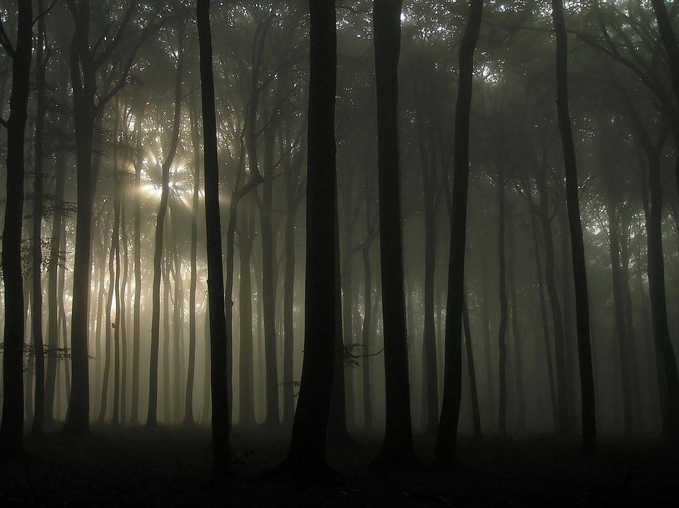 Las w Witkowicach.jpg