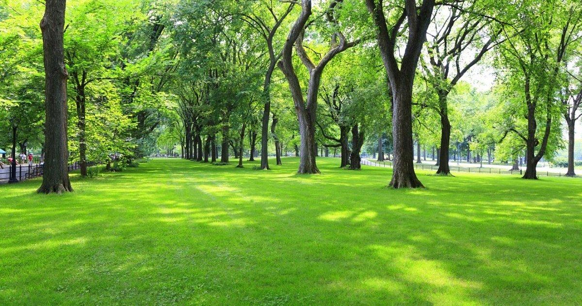 Znaczenie terenów zieleni