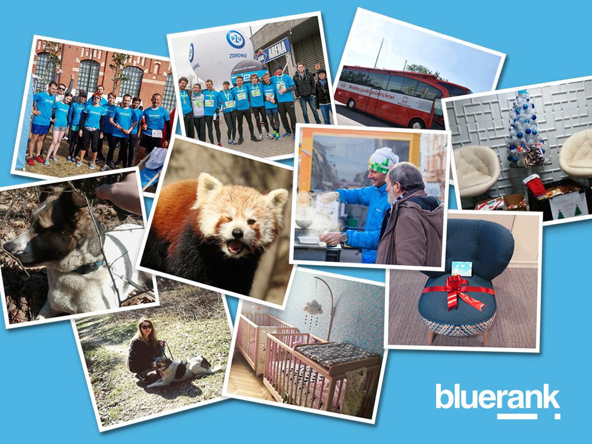 Bluerank ma dobre serce i wyróżnienie w konkursie Wiosło CSR 2016