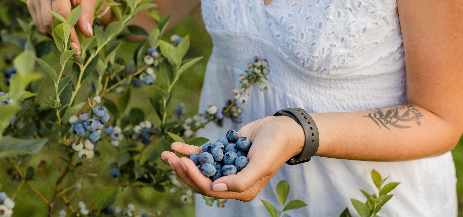 Dlaczego borówki są ulubionym owocem dietetyków