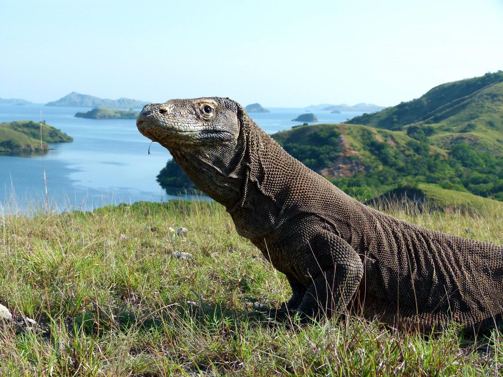 """Oko w oko z najgroźniejszymi zwierzętami świata, czyli """"Tydzień potwornickich"""" na Nat Geo Wild"""