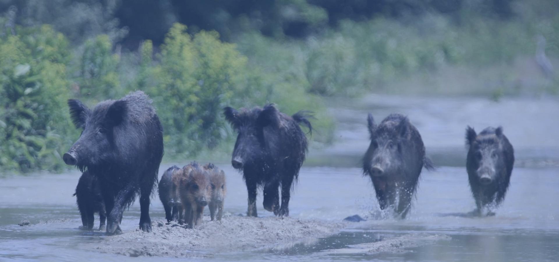 Od kogo możemy żądać odszkodowania za szkody spowodowane przez dzikie zwierzęta?