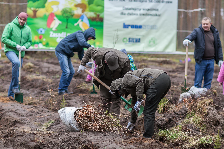 Polska zyskała pół miliona drzew!